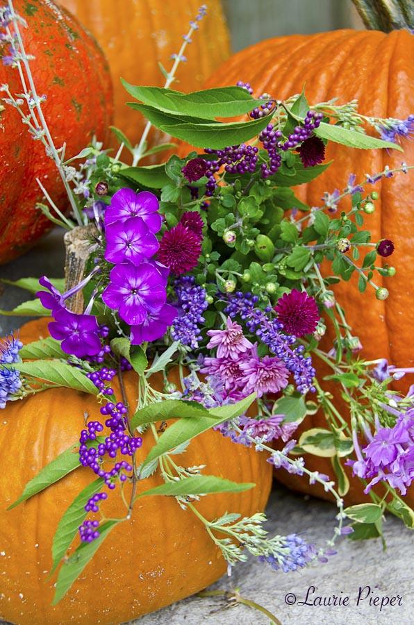 Pumpkins&AutumnFlowers2