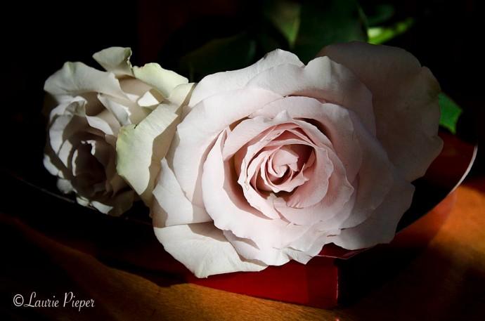 RoseQuickSandValentinesBox