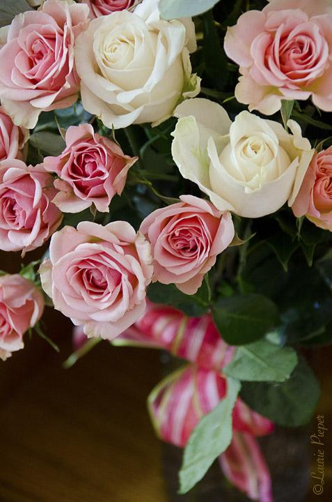 RosesPinkWhiteOnWood