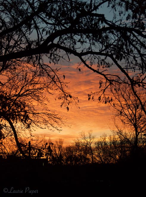 SunriseFramedByTrees